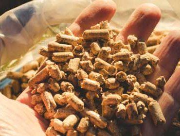 Poêle biomasse